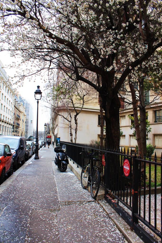 Paris Streets Spring