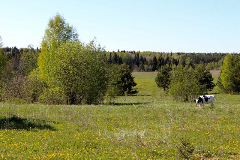 Russland Landschaft