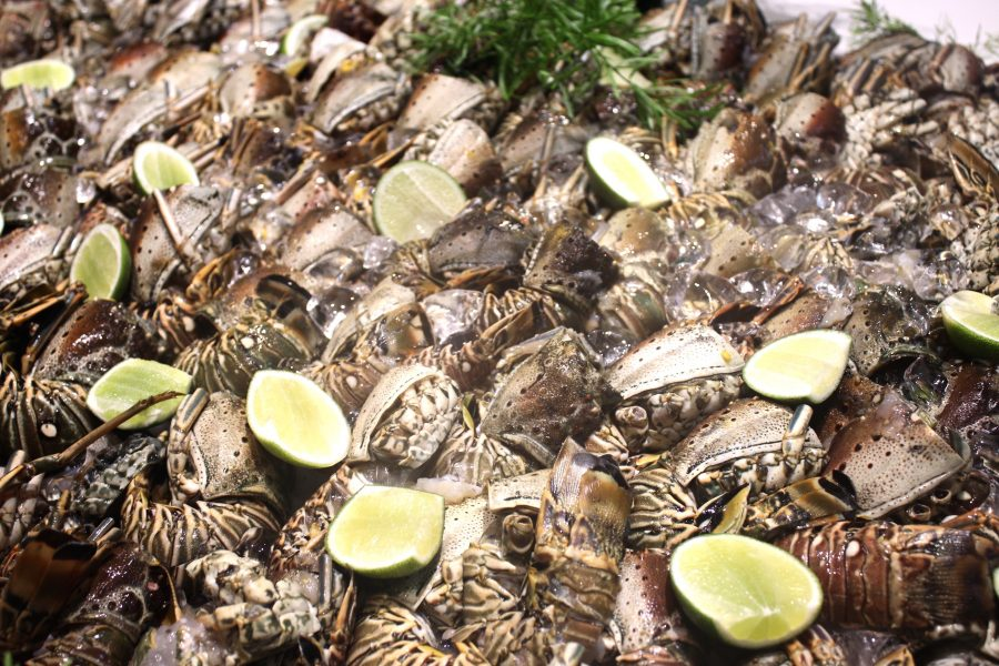 fresh sea food holidays