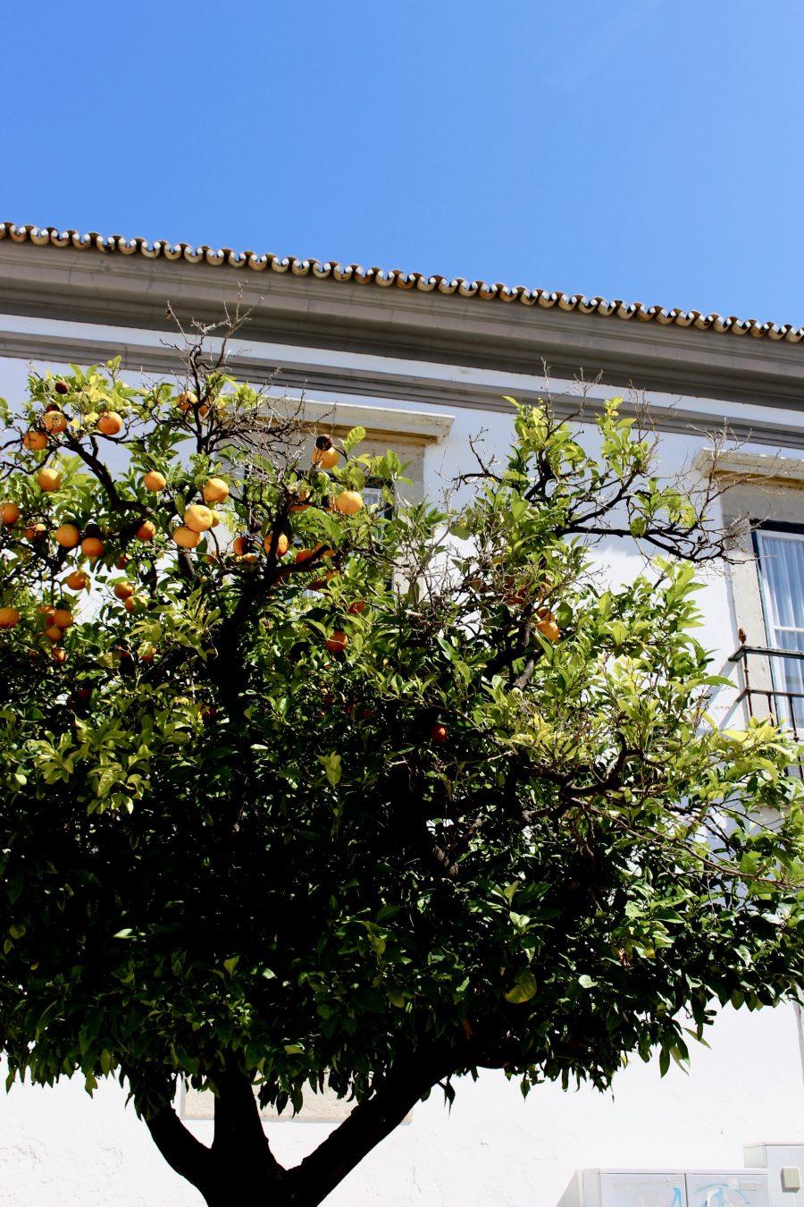 Faro Algarve